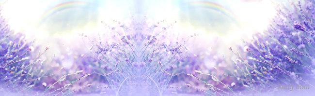 紫色毛玻璃唯美背景banner背景高清大图-毛玻璃背景淡雅/清新/唯美