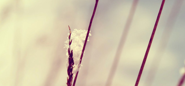 树枝花朵梦幻背景