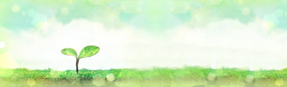 卡通手绘小草发芽背景banner