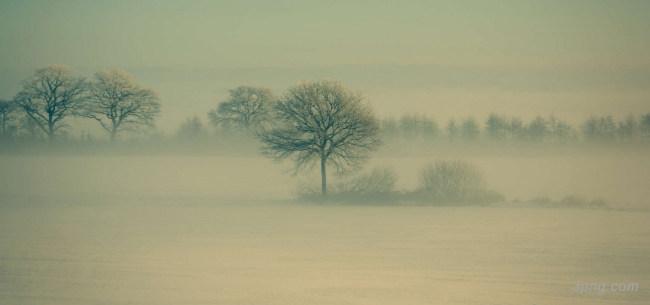 大树植物背景背景高清大图-大树背景自然/风光