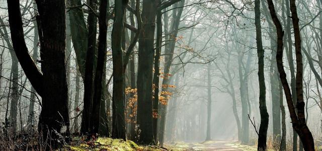 秋天树林背景