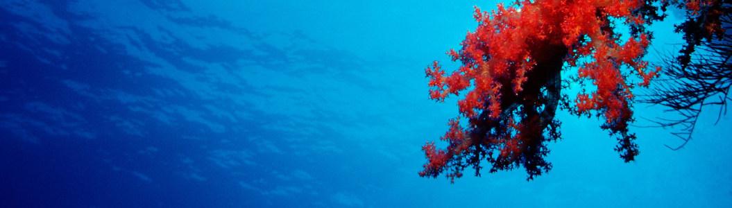 海底世界珊瑚摄影壁纸banner