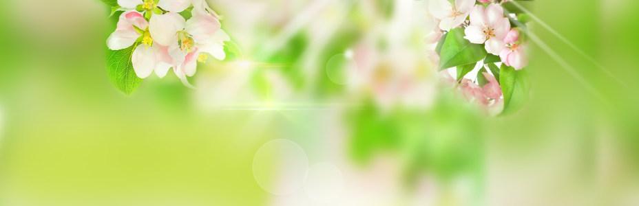 清新鲜花背景