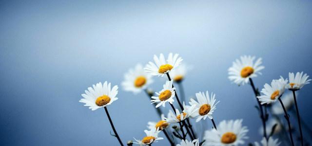 高清鲜花背景
