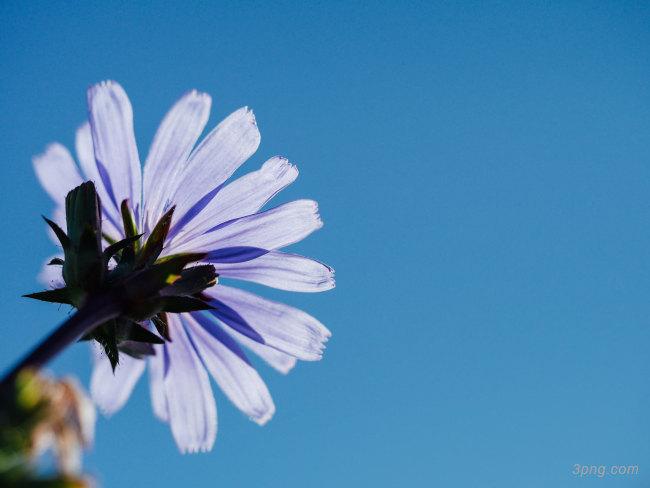 花卉背景背景高清大图-花卉背景鲜花