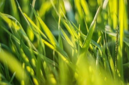 高清草地背景高清背景图片素材下载
