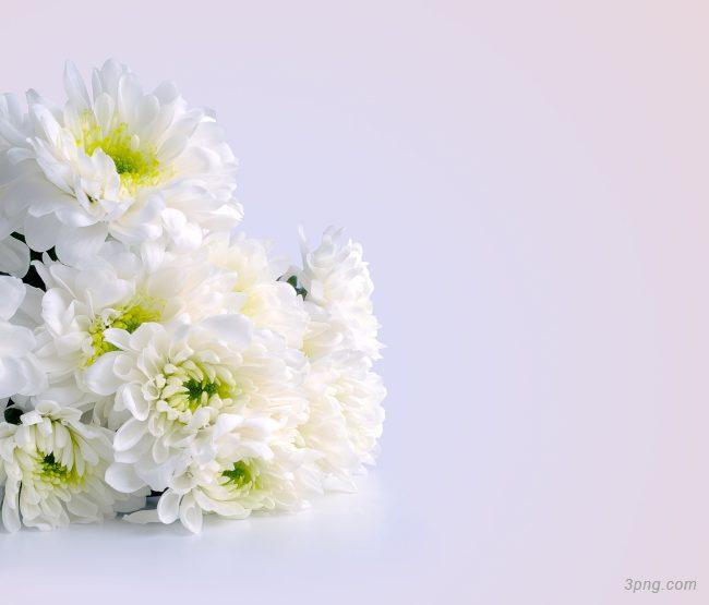 白色的花背景背景高清大图-白色背景底纹/肌理