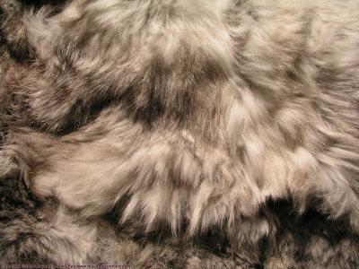 动物皮毛纹理