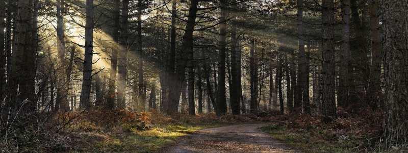 森林banner