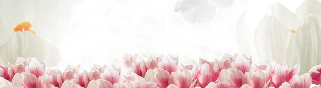 唯美粉色郁金香海报背景高清背景图片素材下载