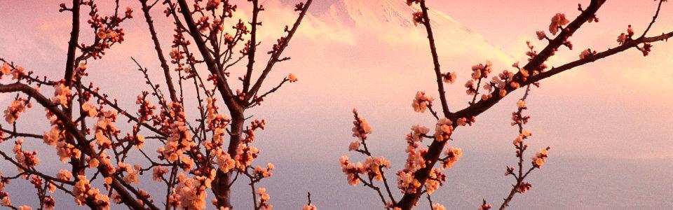 桃花风景高清背景图片素材下载