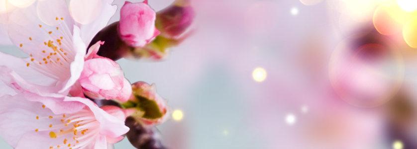 香水粉色花卉唯美背景banner