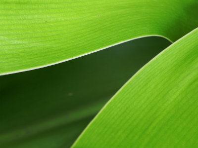 绿叶纹路纹理背景高清背景图片素材下载