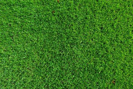 绿色草地草坪背景