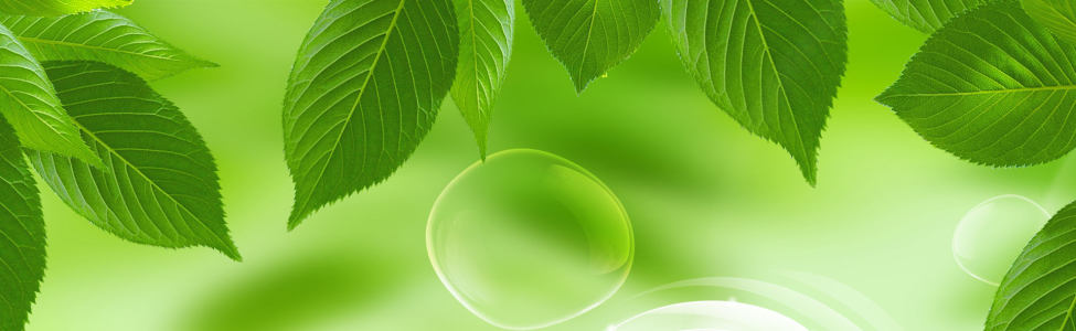 绿叶banner