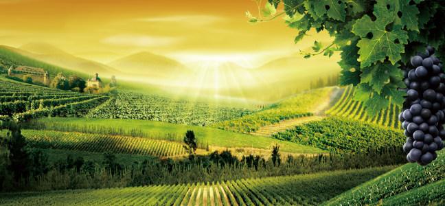 葡萄酒庄园背景