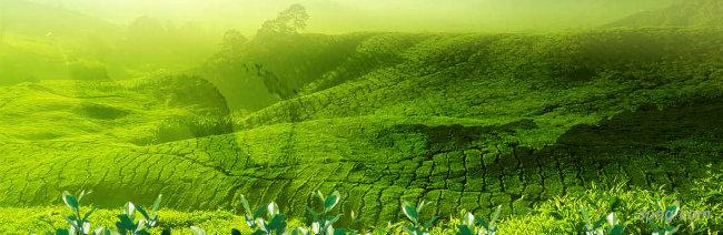 茶茶道背景背景高清大图-茶道背景自然/风光