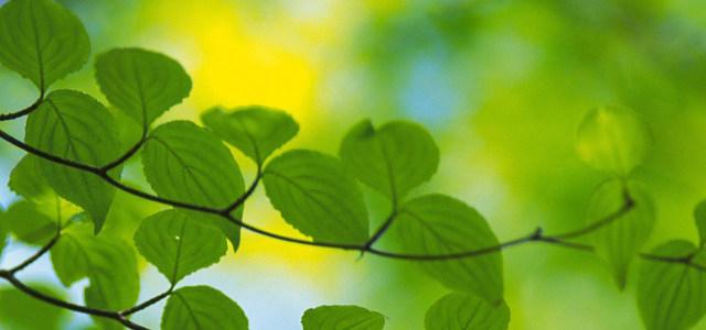 绿色环保背景高清背景图片素材下载