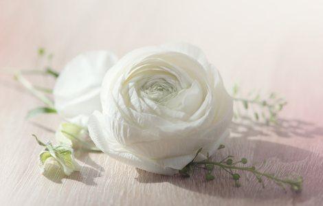 白色的花背景