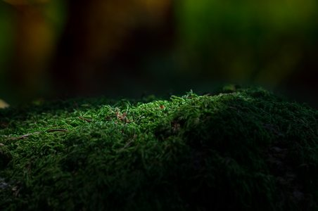 森林苔藓背景