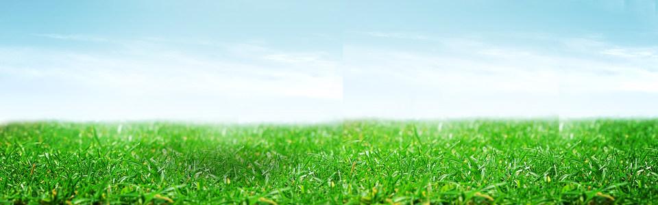 绿色草坪淘宝背景