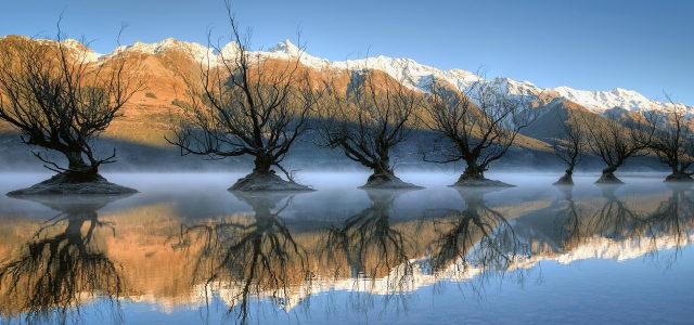 天空湖水大树背景