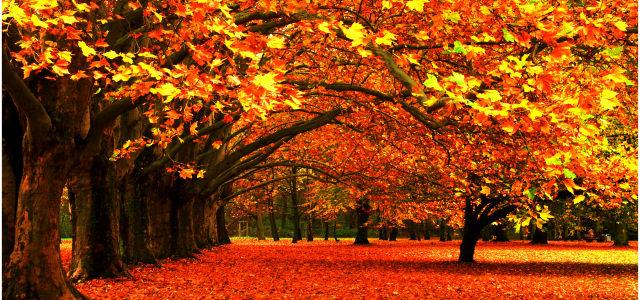 唯美秋季风景背景