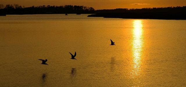 夕阳湖水海鸥背景