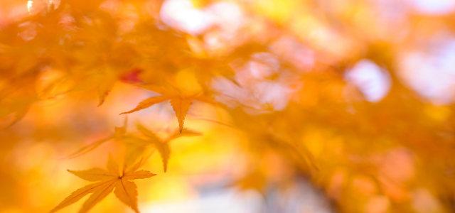 树叶梦幻背景
