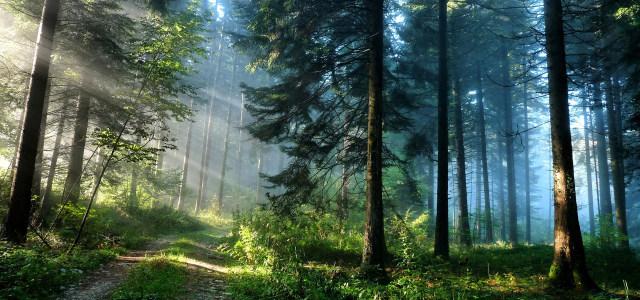 绿色森林背景