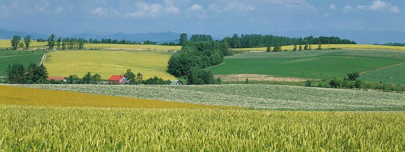 田园banner