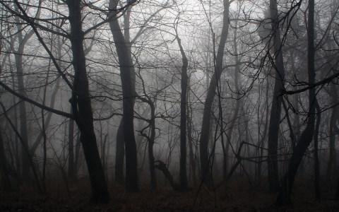 恐怖森林背景