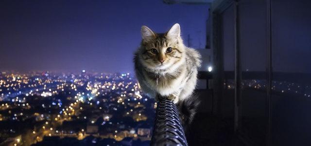 小猫 动物 背景