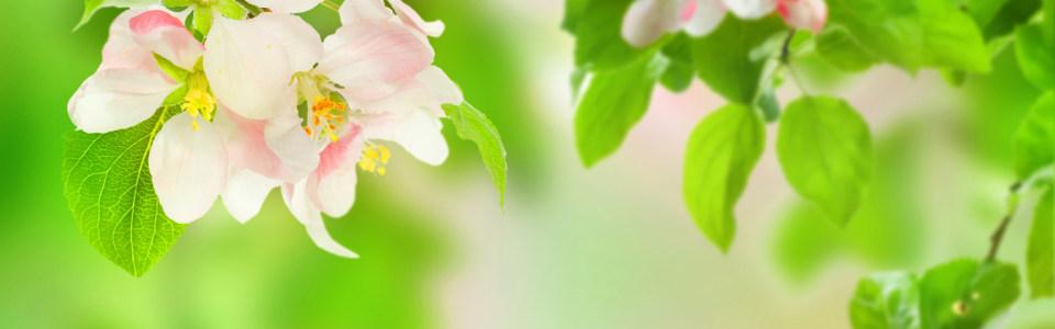 唯美高清花朵清新海报背景