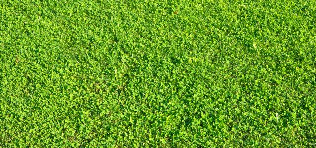 草地质感背景