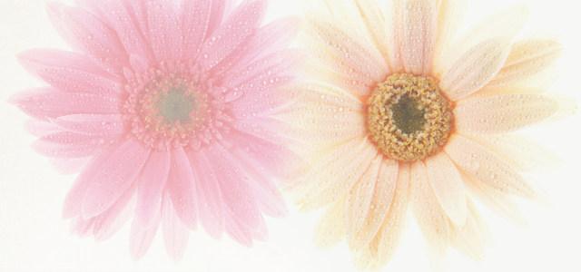 唯美花朵背景高清背景图片素材下载