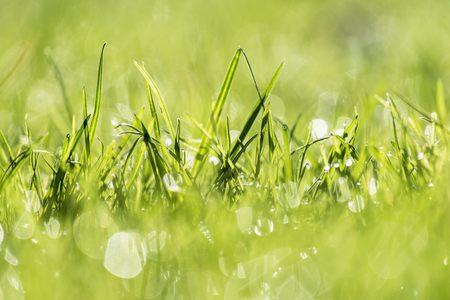绿色清新草地背景高清背景图片素材下载