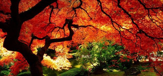 秋季树林背景高清背景图片素材下载
