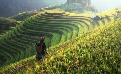 农业高清背景图片素材下载