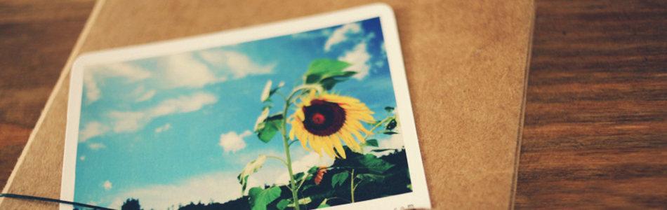 唯美照片中的向日葵海报背景