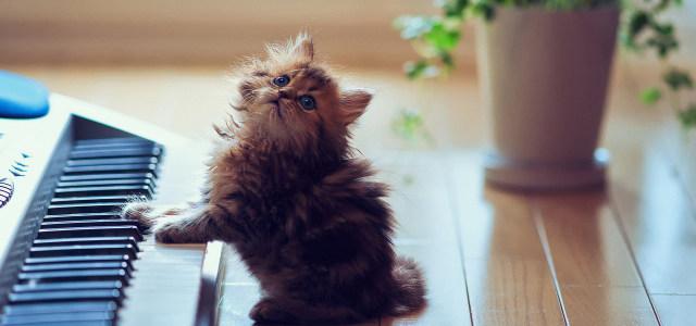 钢琴小猫摄影