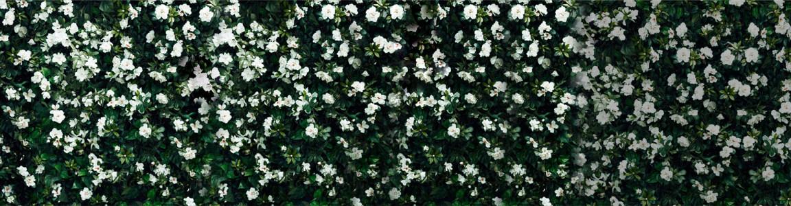 美丽白色花朵服饰海报背景