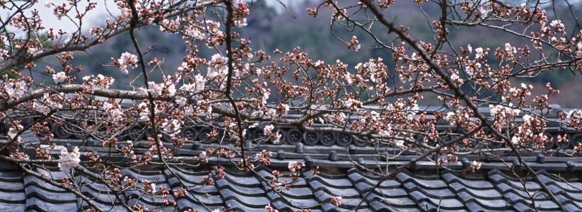 樱花日式建筑