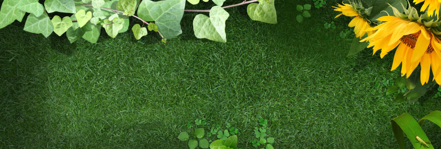 向日葵草地海报背景高清背景图片素材下载