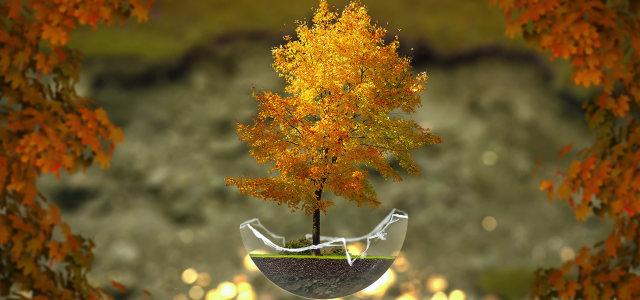 秋色树木背景