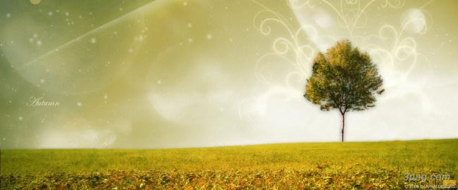 古树夕阳余晖落日幸福唯美图背景高清大图-古树背景淡雅/清新/唯美