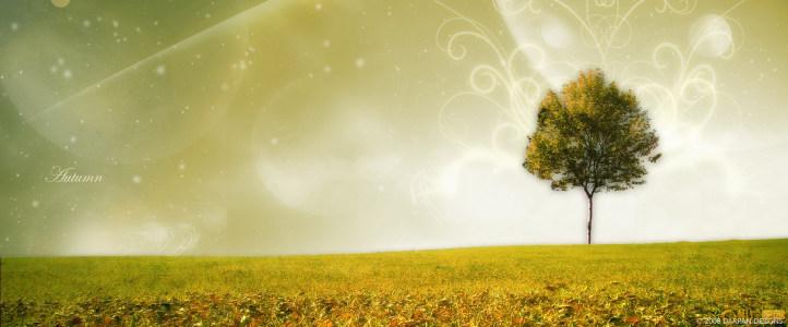 古树夕阳余晖落日幸福唯美图