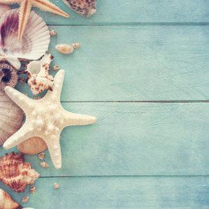 夏日清新海边贝壳海星背景
