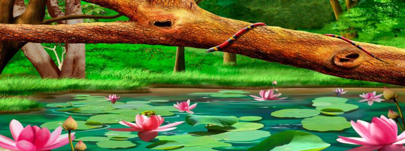 森林里的荷花池背景高清背景图片素材下载