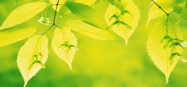 高清树叶摄影